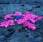 Pink bottles are recovered on the Cornish coast with thanks to @__lucybloor__